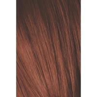 Крем-краска Schwarzkopf professional Igora Royal Absolutes 6-80, темный русый красный натуральный, 60 мл